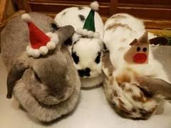 【秋葉原】メリークリスマスクーリング