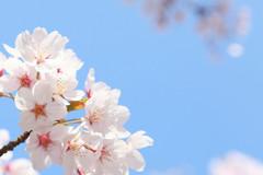 【秋葉原】春陽気