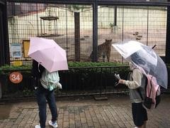 【福岡】マンガ・イラストコース動物園絵画実習★