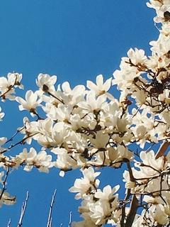 【浜松】春の訪れを感じました