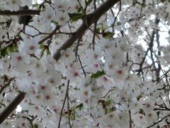 【広島】お花見気分☆彡