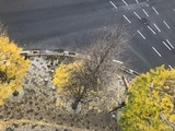 【鹿児島】銀杏の葉・・清掃しました