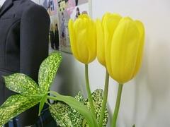 【鹿児島】チューリップが春を届けに来た!