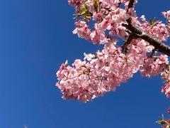 【鹿児島】学習の成果が少しずつ実を結び花が咲く