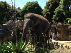 マンガ・イラストコース 動物園に行ってきました☆