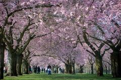 【神戸】春はそこまで来ました!!!
