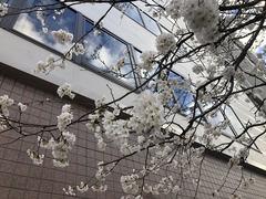 【高知】 ☆八分咲き桜を見ながら勉強☆