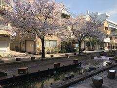 【高知】 ☆桜が舞っています☆