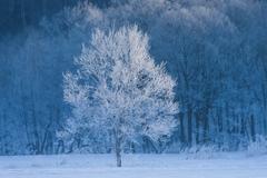 【名古屋第二】雪がパラパラと。寒さに負けないぞ(・ω ・´;)
