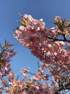 【名古屋】春っぽいお天気