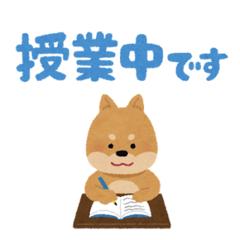 【新潟】来週より、専門チャレンジコースの授業がスタートします(*´ω`*)