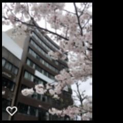 【岡山】お花見ランチ❁