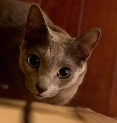 【大宮】今日はネコの日!(ペットいろいろ<その3>)