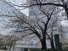 【大宮】在校生へ☆お知らせ(桜☆満開です☆彡)