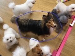【大宮】ペット<犬種クイズ!!>答えは。。。