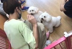 【大宮】ペット専攻☆実習!(犬種クイズ・その2)