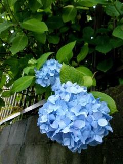 【大阪】雨の季節になりました☺