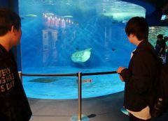 【仙台】特別活動で水族館へ行ってきました