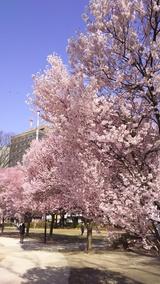 【仙台】みちのくの春だより~明日から新年度です!