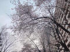 【仙台】であいの春~いつつばし花だより~