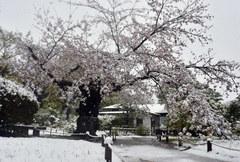 【新宿】季節はずれの雪...