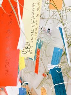 【静岡】七夕ですね*:゚+。.☆.+*✩⡱:゚