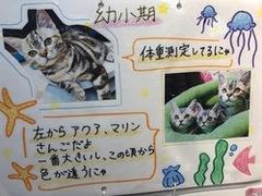 7/8(木) ペットコース説明会